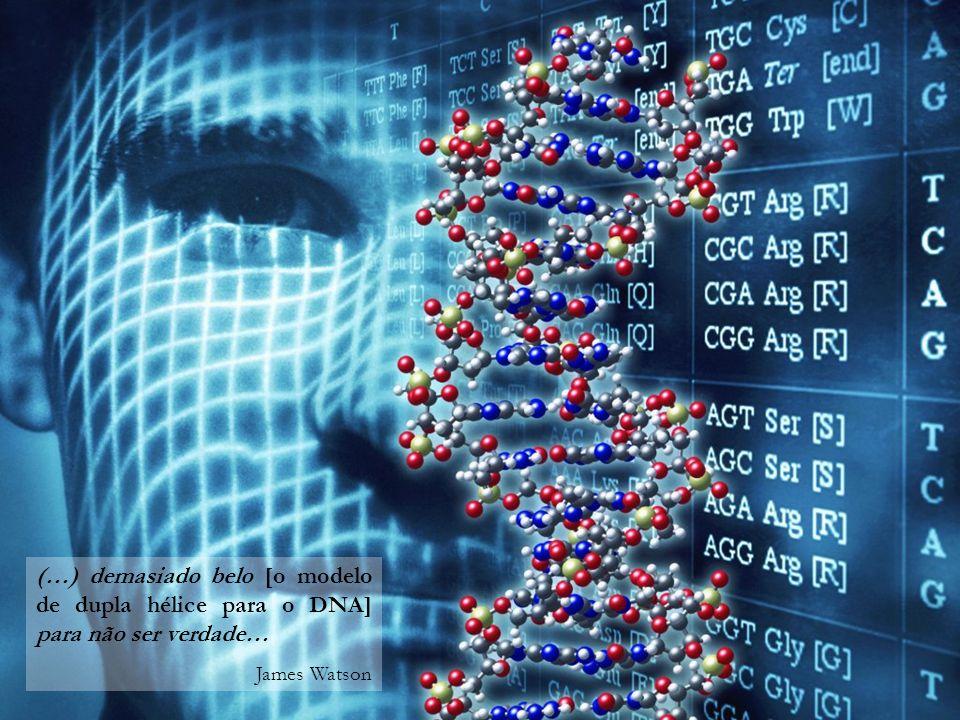 (…) demasiado belo [o modelo de dupla hélice para o DNA] para não ser verdade…